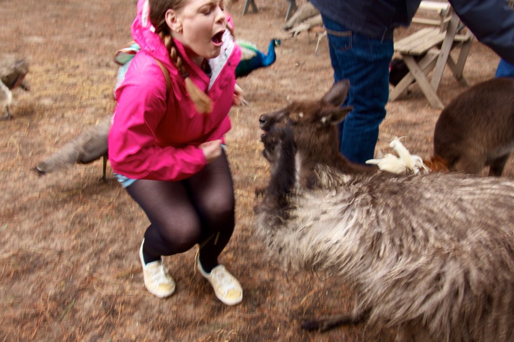 I was 100% not kidding about the pain of being pecked by an emu.